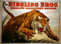 Tiger Lithograph for Ringling Bros Circus attributed to Jonathan Livingston Bull at Circus World Museum. Baraboo, WI.
